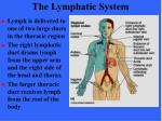 the lymphatic system17