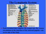 the lymphatic system18