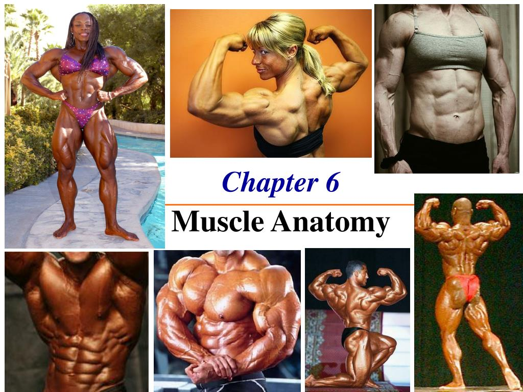 chapter 6 the muscle anatomy l.