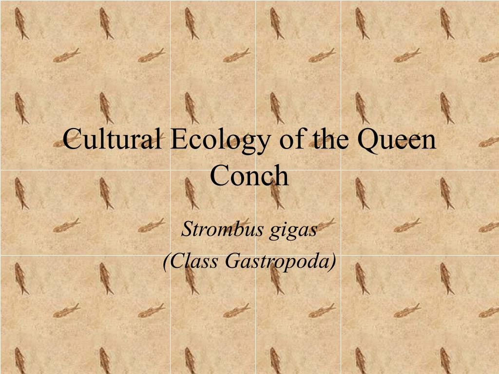 cultural ecology of the queen conch l.