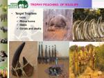 trophy poaching of wildlife