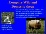 compare wild and domestic sheep