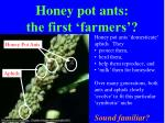honey pot ants the first farmers