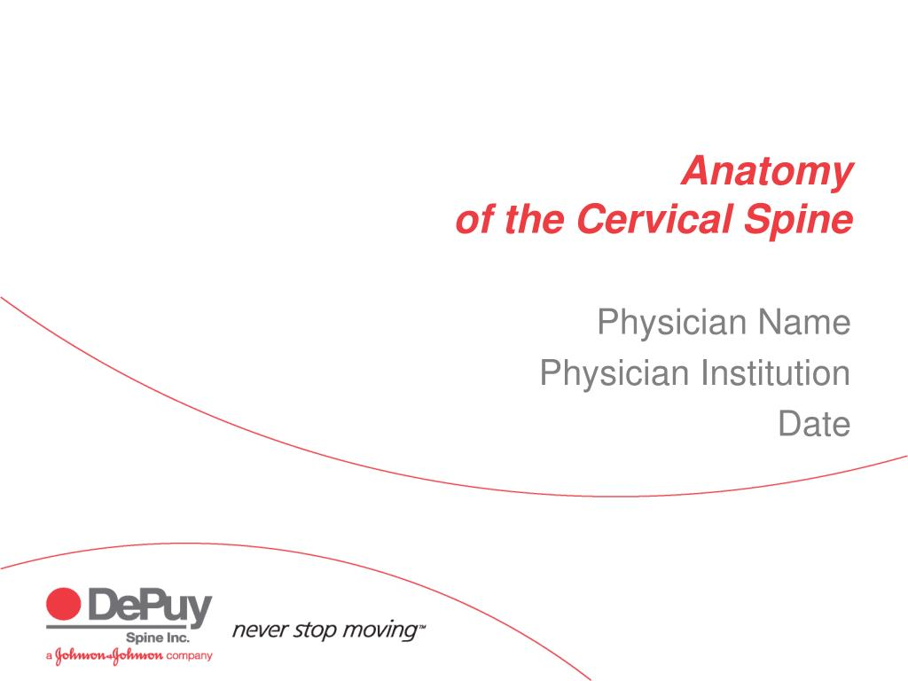 anatomy of the cervical spine l.