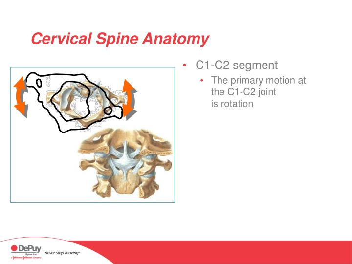 Ppt Anatomy Of The Cervical Spine Powerpoint Presentation Id337789