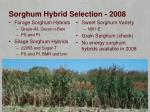 sorghum hybrid selection 2008