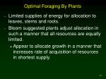 optimal foraging by plants