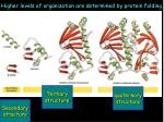higher levels of organization are determined by protein folding