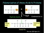 polymerization of amino acids to proteins