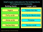small organic molecules are the building blocks of biological macromolecules