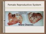 female reproductive system14