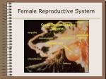 female reproductive system17