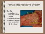 female reproductive system21