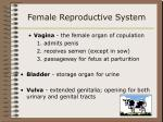 female reproductive system22