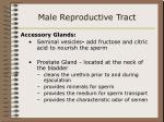 male reproductive tract40