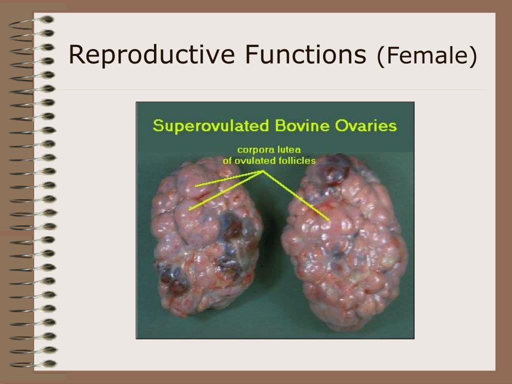 Reproductive Functions