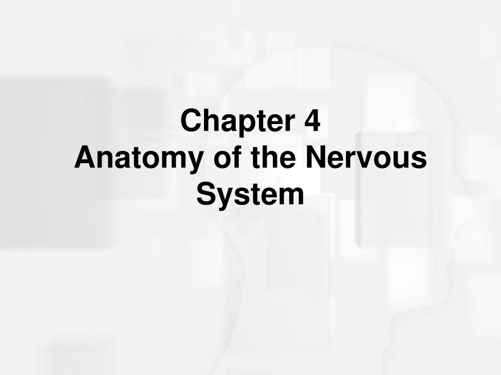 chapter 4 anatomy of the nervous system l.