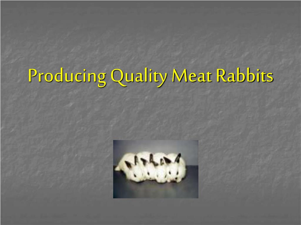 producing quality meat rabbits l.