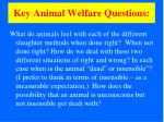 key animal welfare questions