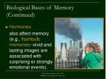 biological bases of memory continued
