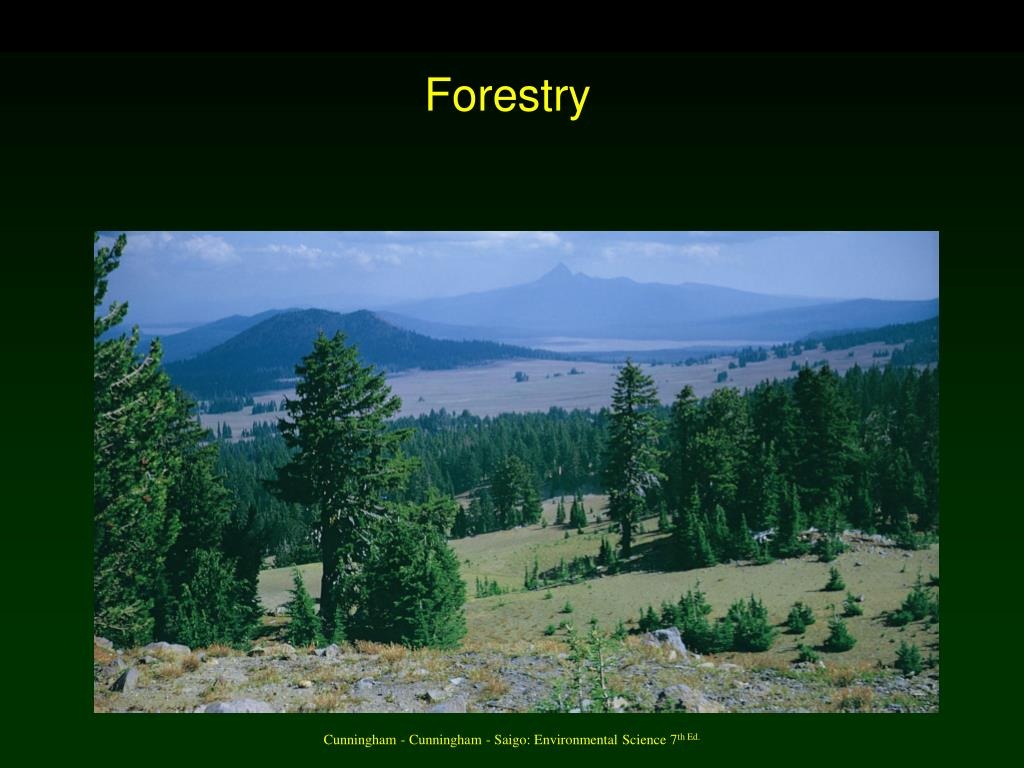 forestry l.