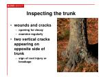 inspecting the trunk15
