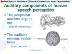 auditory components of human speech perception