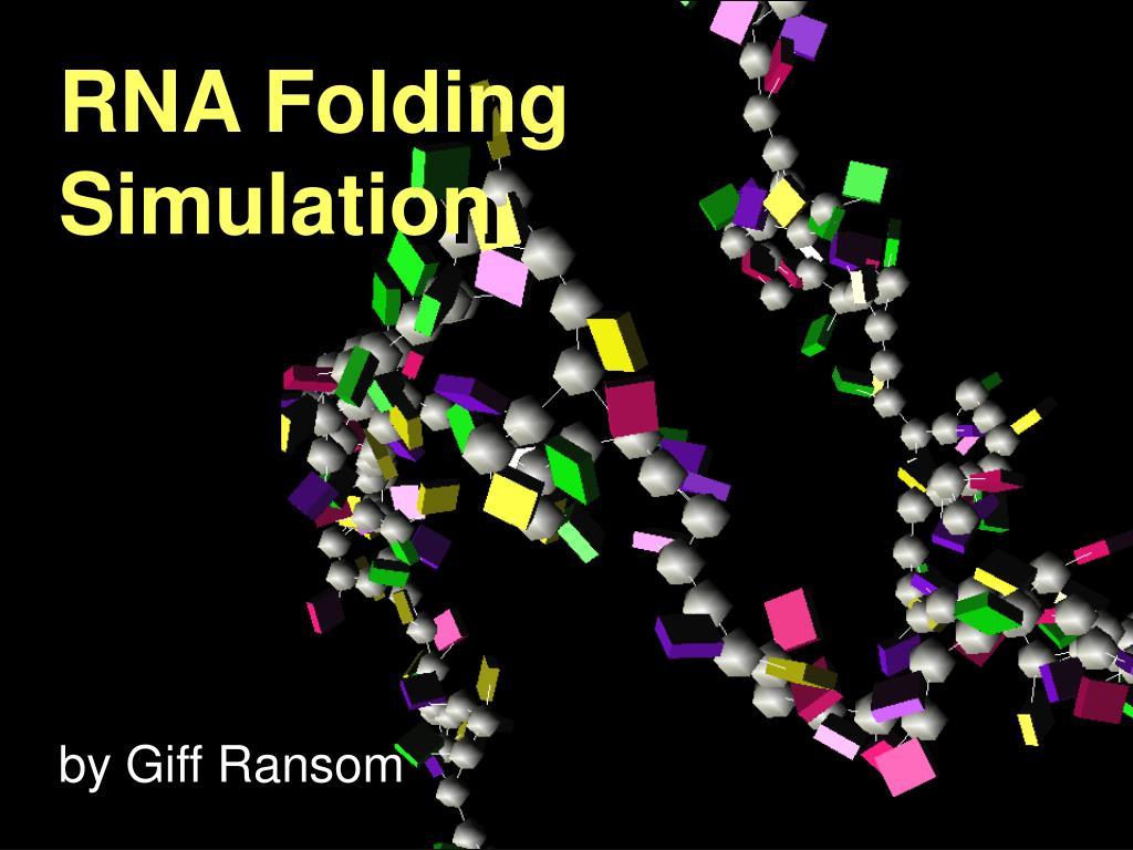 rna folding simulation l.