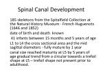 spinal canal development