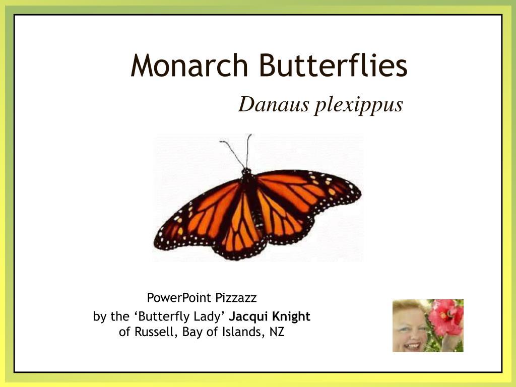 monarch butterflies l.