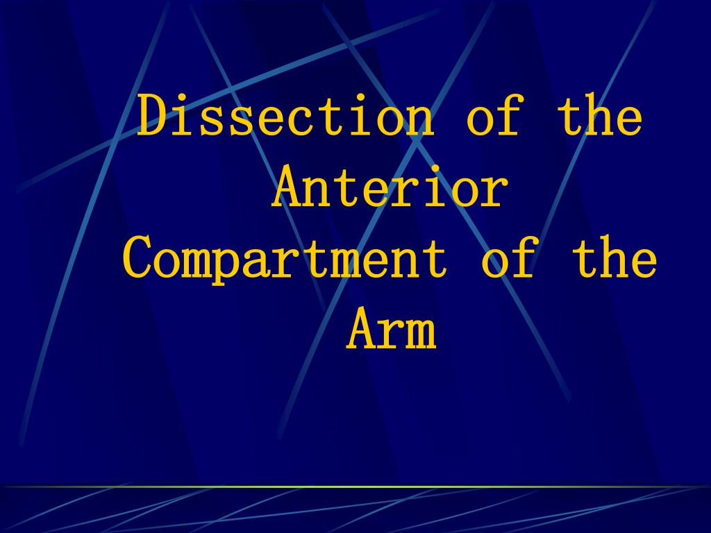 dissection of the anterior compartment of the arm l.
