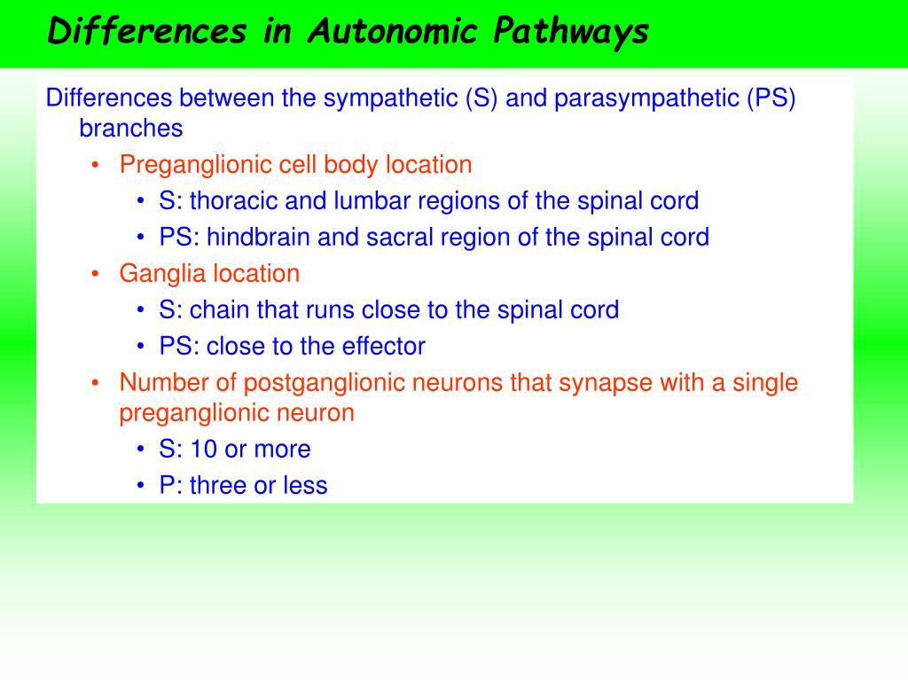 Differences in Autonomic Pathways