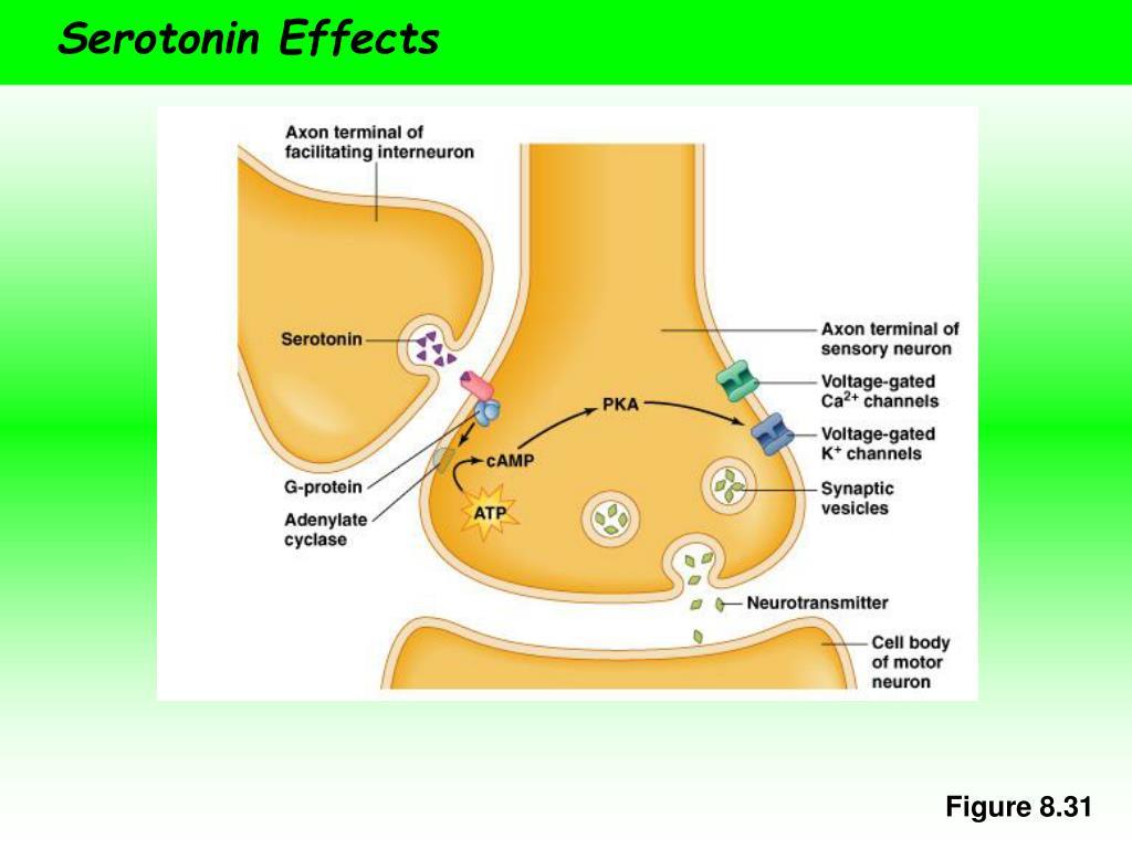 Serotonin Effects