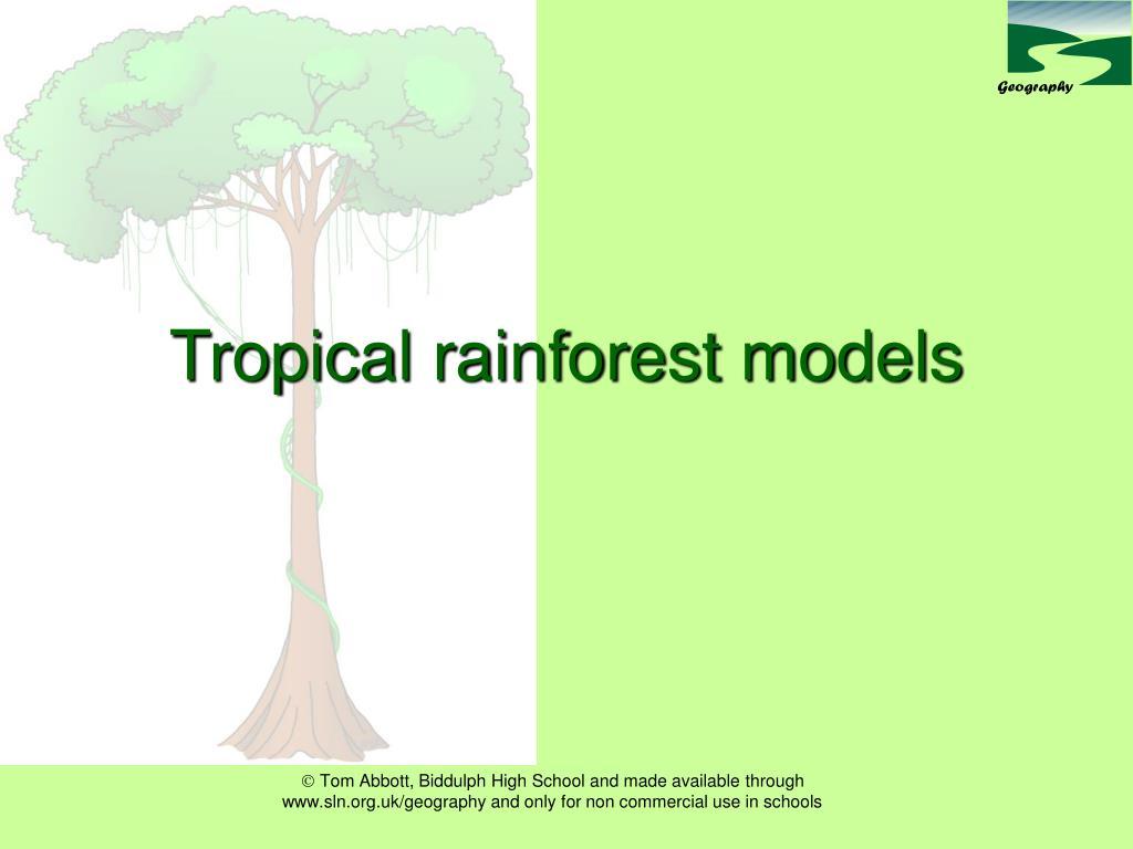 tropical rainforest models l.