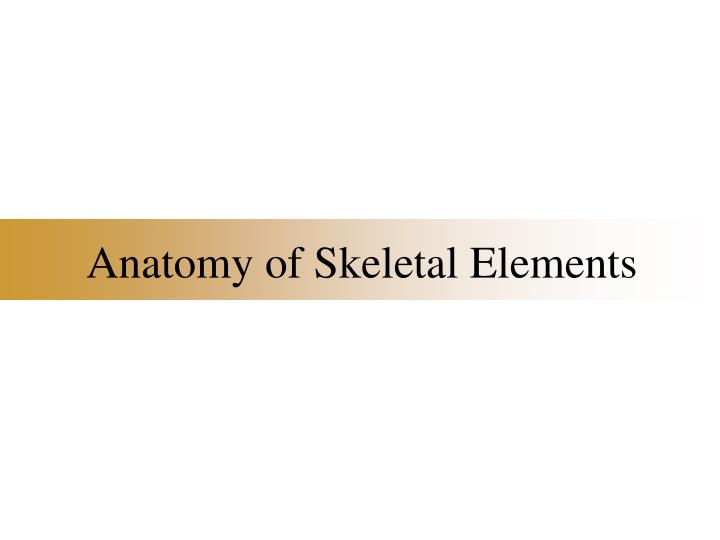 anatomy of skeletal elements n.