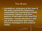 the brain15