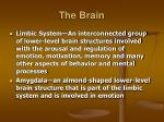 the brain17