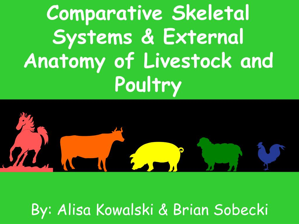 comparative skeletal systems external anatomy of livestock and poultry l.