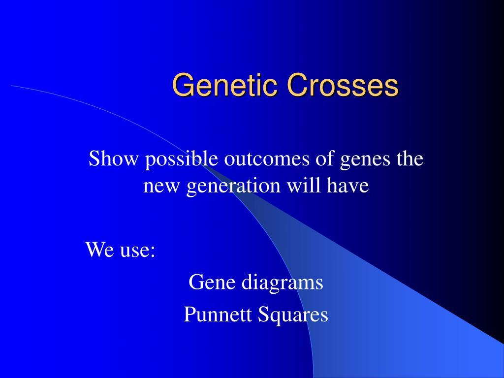 genetic crosses l.