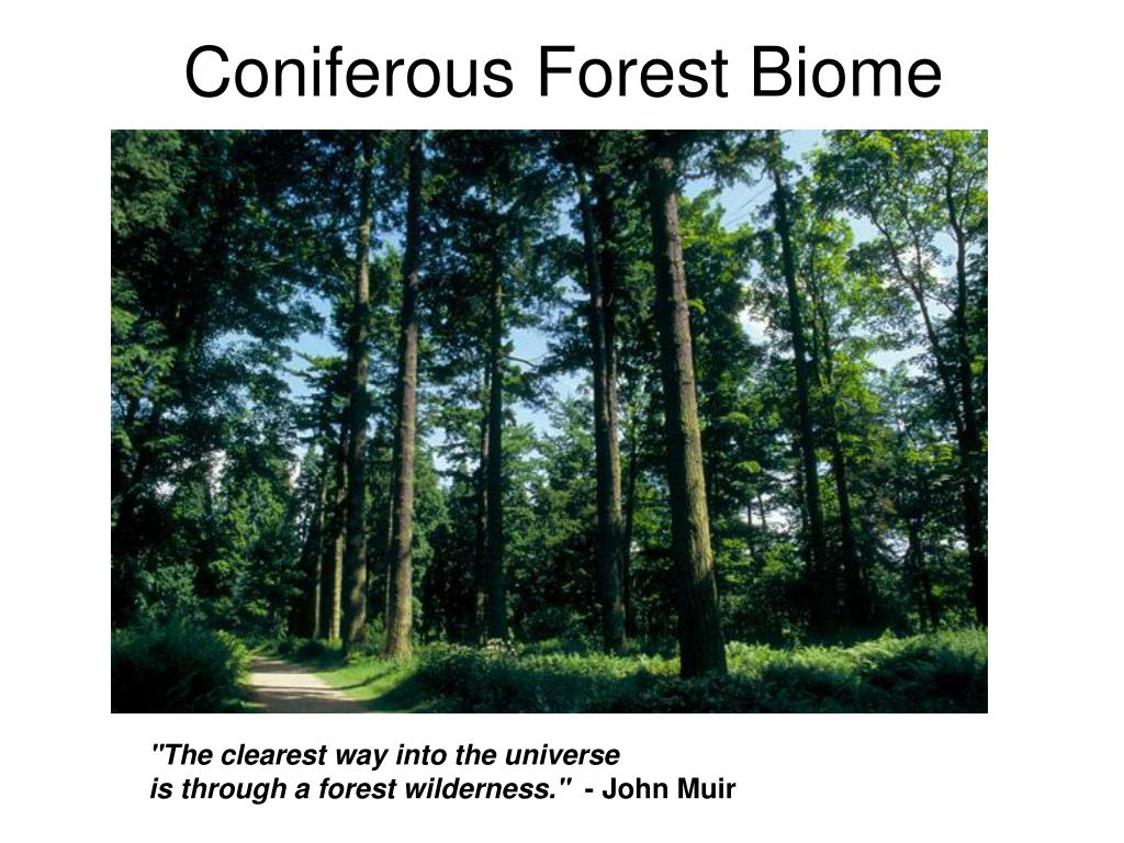coniferous forest biome l.