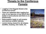 threats to the coniferous forests