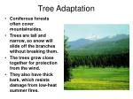 tree adaptation