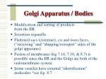 golgi apparatus bodies