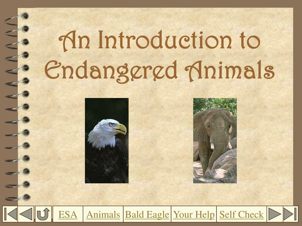 an introduction to endangered animals l.