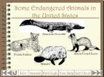 some endangered animals in the united states