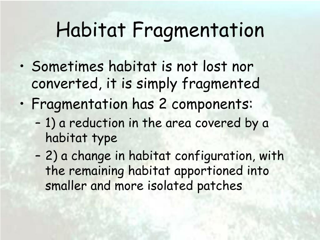 habitat fragmentation l.