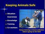 keeping animals safe