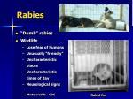 rabies23