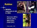 rabies24
