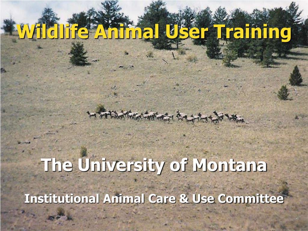 wildlife animal user training l.